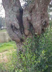 dall'albero alla casa